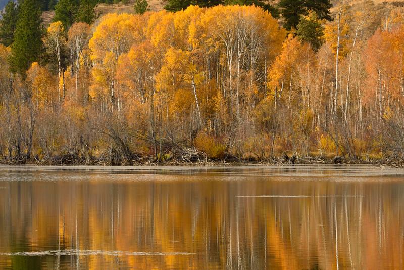 Beaver Pond Reflections