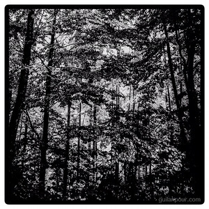 """31/52 - """"Forest"""""""