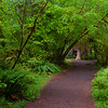 Hall of Mosses Trail