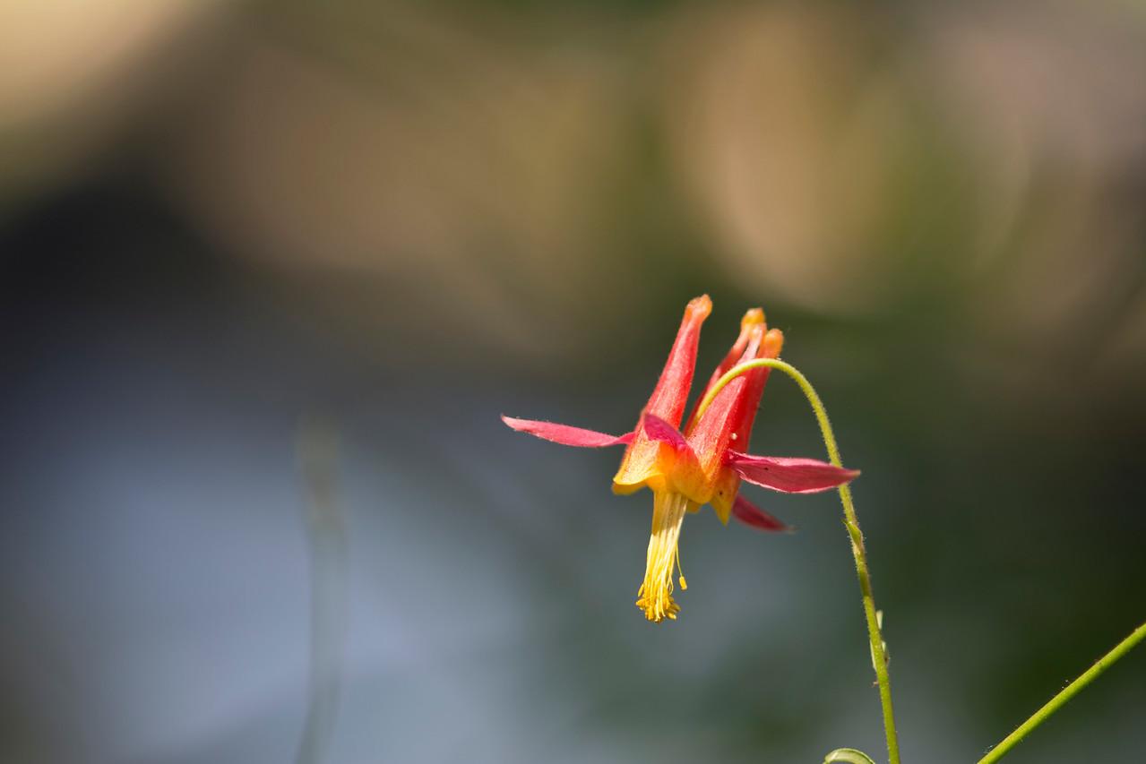 20150725-Eastern Sierra-025