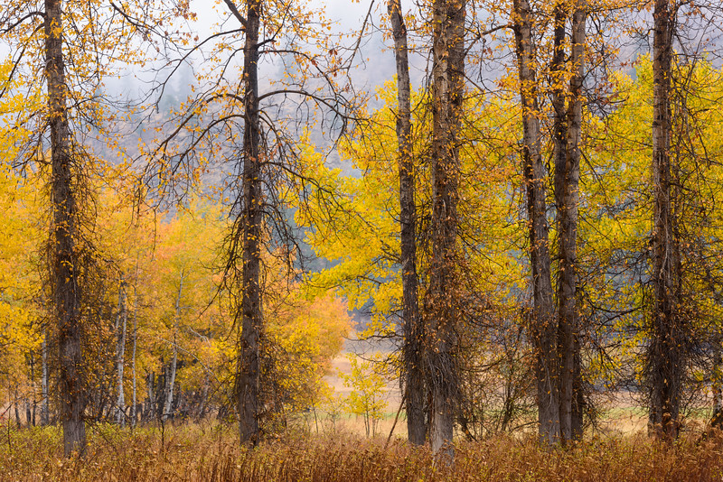 Big Valley Trees