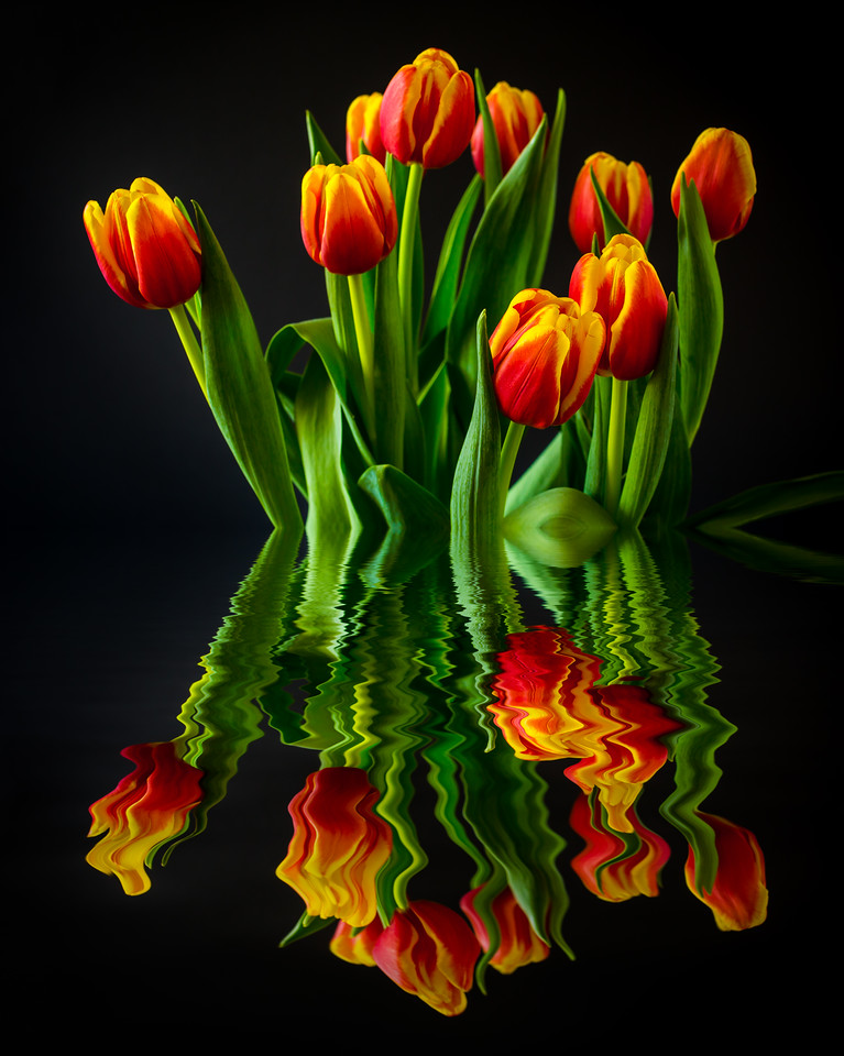 Spring Tulips, Reflected