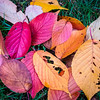 Autumn Leaves Fallen