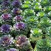 flora (56)