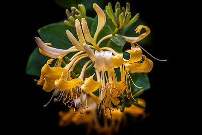 Flora of Australia and the UK