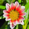 Flora (78)