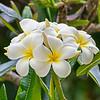 flora (25)