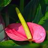 Flora (179)