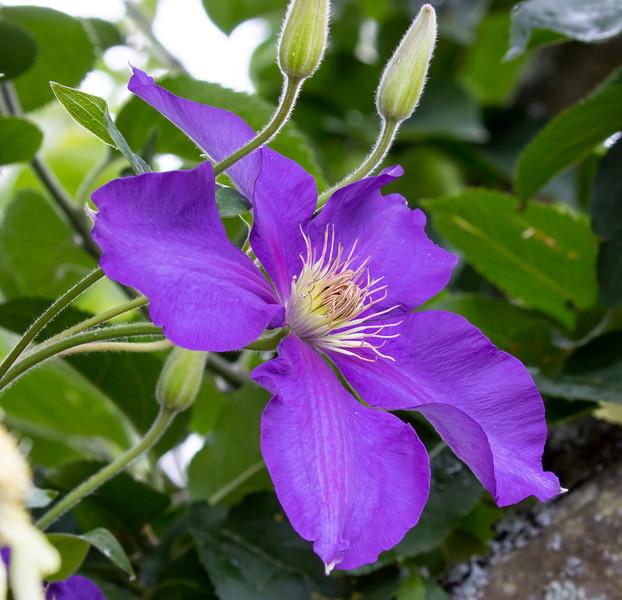 Flora (93)