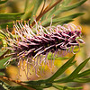flora (28)