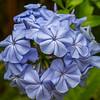 Flora (135)