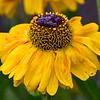 Flora (106)