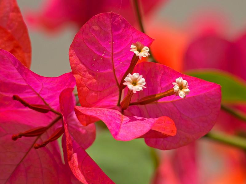 flora (90)