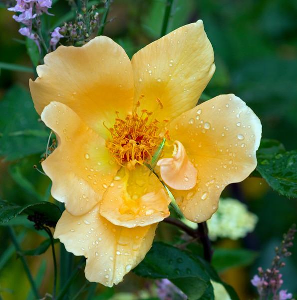 Flora (89)