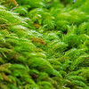 Moss Lamington National Park