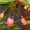 Flora of Australia and UK