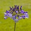 flora (38)