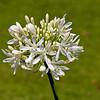 flora (47)