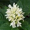 flora (53)
