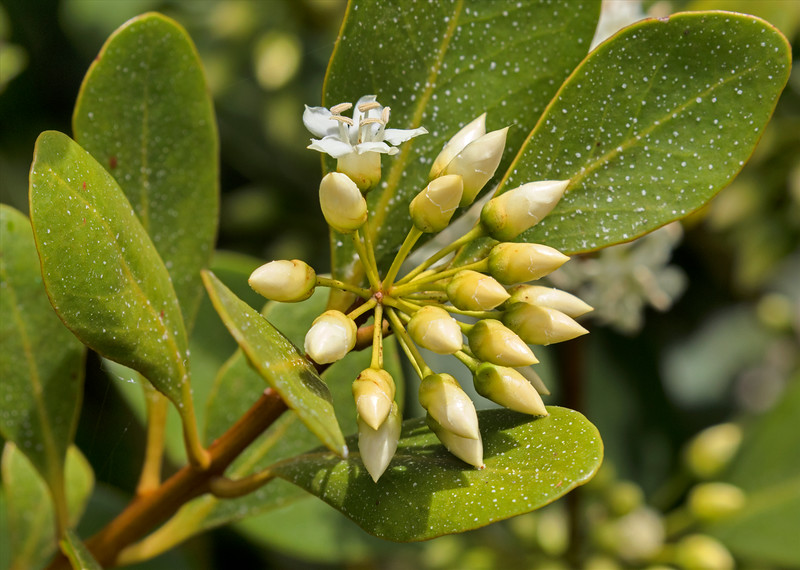 flora (88)