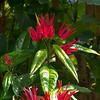 flora (50)