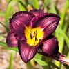 flora (48)