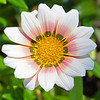 Flora (80)
