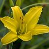 Flora (98)