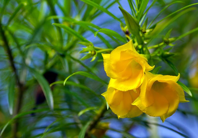 Flora (185)