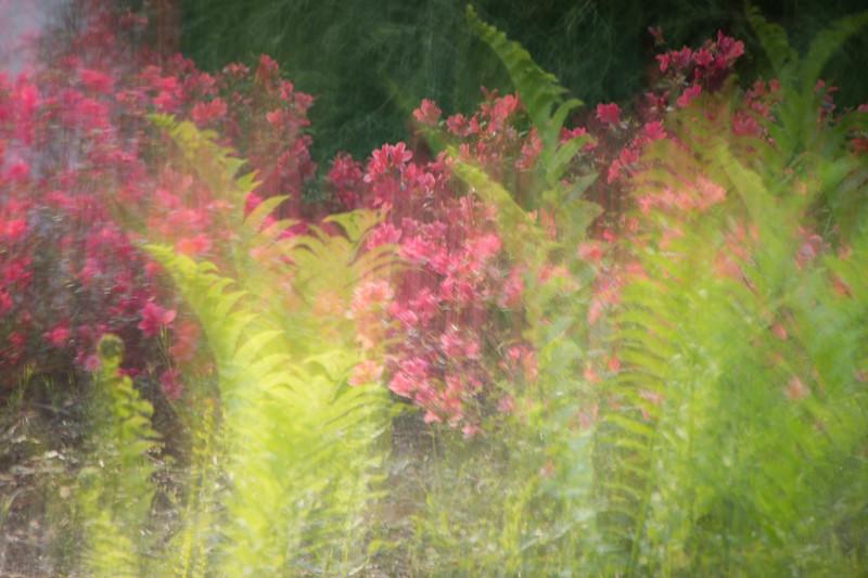 Spring Garden 7
