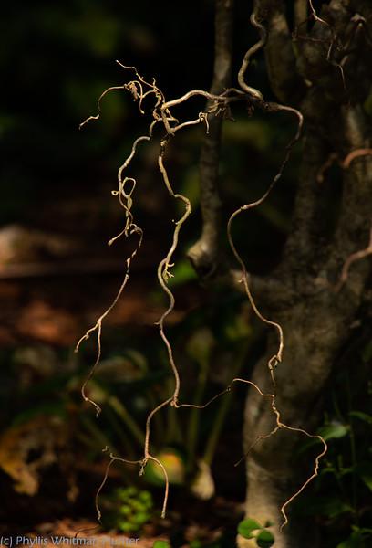 Tendrils, Detail