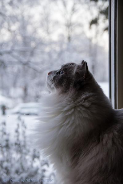 White on White, Snow Watcher.