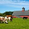 Drumlin Farm, MA