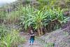 Natural Park, Cova/Ribeira Paúl/Torre, Santo Antao island