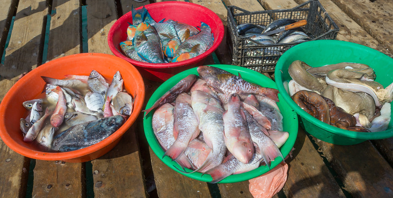 fresh fish sales, right Muraena spec