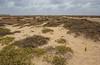 salt-tolerant habitat, (halophil)