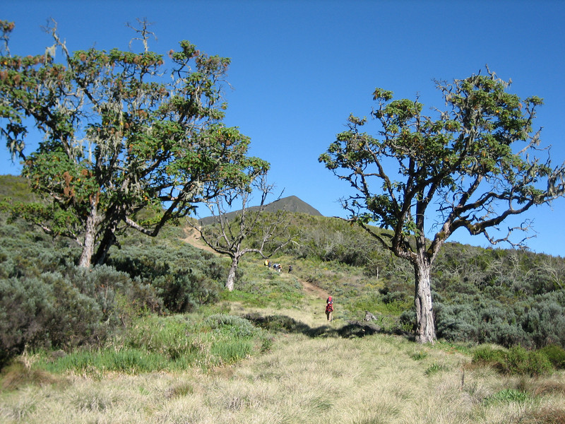 Chogoria Park Gate 2995m-Mugi Hill 3553m-Lake Ellis 3472m-Road End 3327m, Mnt. Kenya National Park