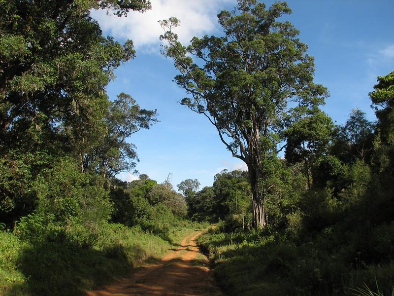 Mnt. Kenya National Park