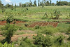cultivation of land, for human use (Kenya)