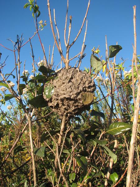 Ants' nest