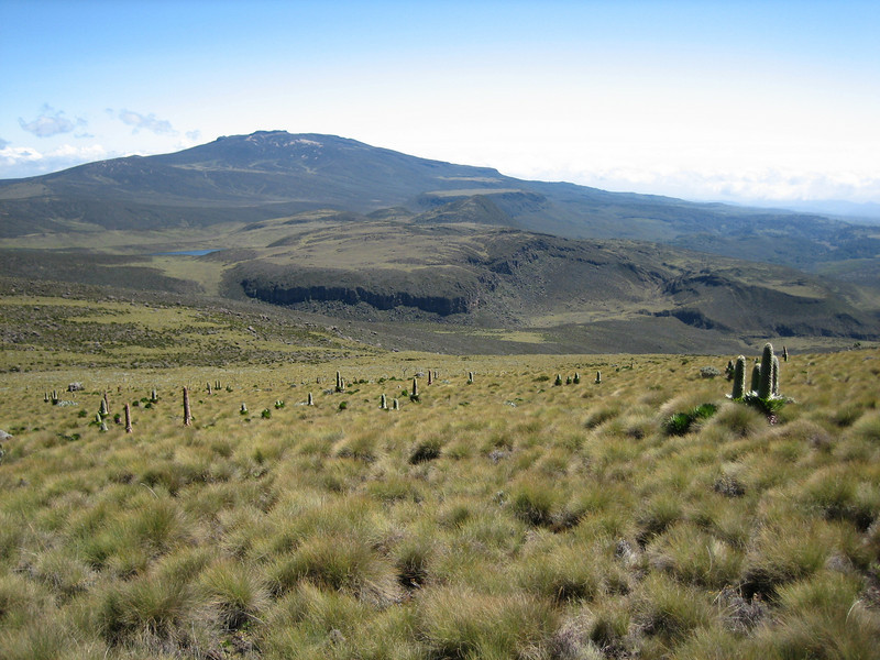 Habitat of Lobelia deckenii ssp. keniensis (Mount Kenya mountains) Road End 3327m-Hall Tarns 4290m, Mnt. Kenya National Park