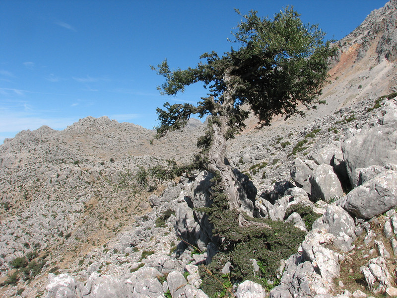 Rif mountains with Quercus coccifera (Tetouan - Dar-Ben-Karriche-El-Bari - Zinat -3- Chefchaouen)