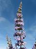 Vitex agnus-castus (Chaste Tree) (Chefchaouen -6- Quazzane - Ain-Defali - Douyet - Fes)
