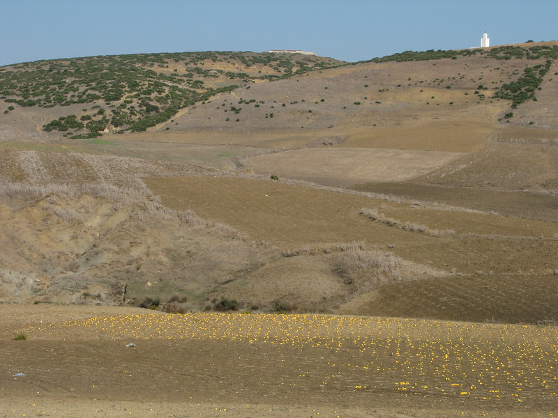 cultivated fields with yellow melons (Grottes d'Hercule - Cap Spartel - Cotta - Airport - El Bori - El Mazla - Larache)