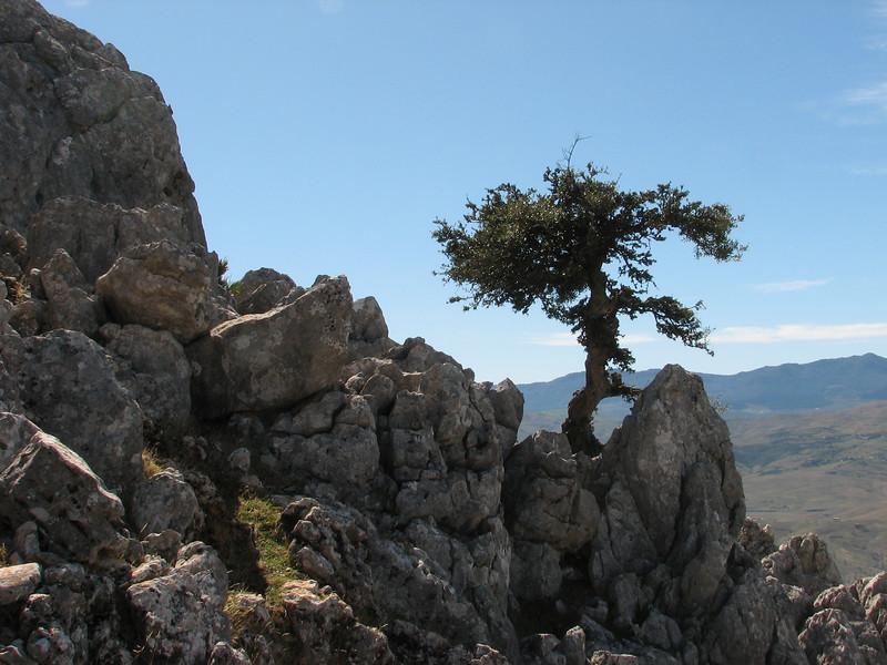 Rif mountains Marocco and Quercus coccifera and Chamaerops humilis, (Tetouan - Dar-Ben-Karriche-El-Bari - Zinat -3- Chefchaouen)