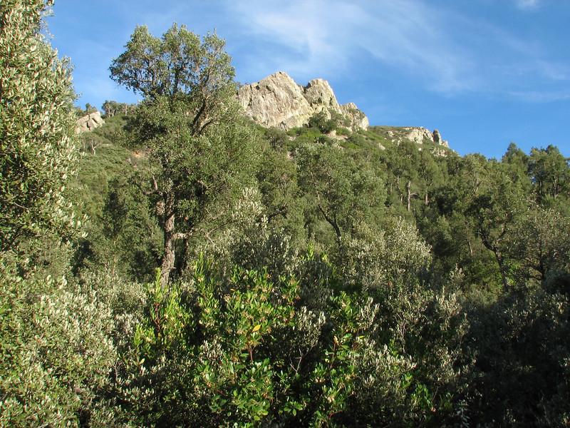 forest with Quercus suber (NL:kurkeik) (Chefchaouen - Talembote - Et-Tlera-de-Qued-Lau - Bou-Ahmed -4- Bab-berret - Bab-Taza - Chefchaouen)