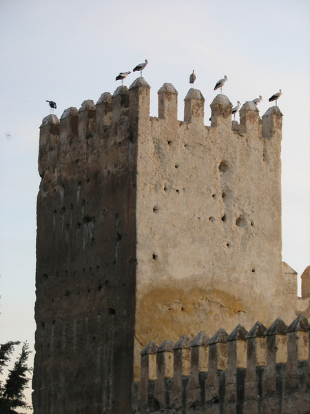 Ciconia ciconia (NL: Ooievaar) on castle of Fes