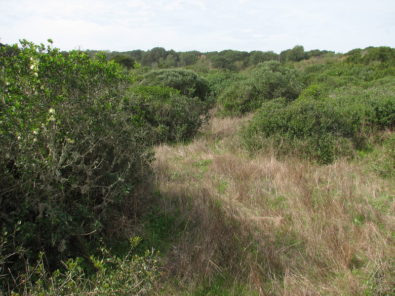 habitat of Clematis cirrhosa and Narcissus papyraceus in the dunes of Kenitra