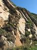 habitat (sandstone) of Calluna vulgaris (Tanger-Seba-Tetouan, N.Morocco)