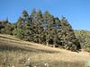 habitat of Cedrus Libani (syn. C.brevifolia) (Fes - Imouzzer-Kandar - Ifrane - Azrou -7-(foret de Cedrus)- Ain-Leuh - El-Hajeb - Boufakrane)
